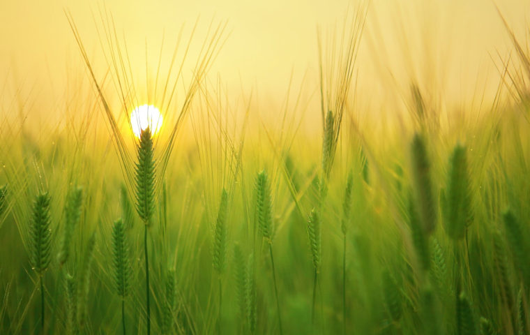 日の出のイメージ